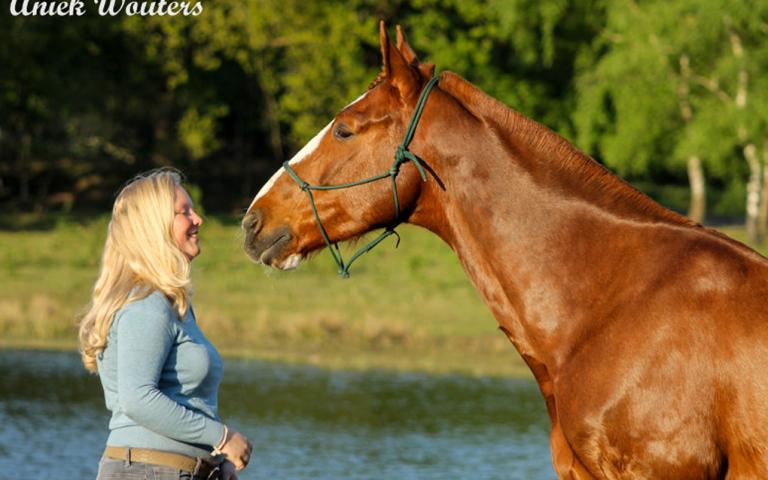 Header Blog: Onze weg naar clickertraining, positieve bekrachtiging, parelli, grondwerk, paard, paardentraining