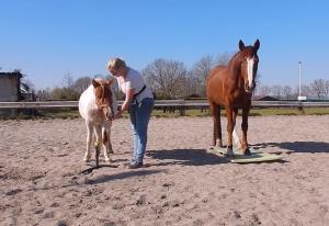 Header blog Positief Paard gaat live, clickertraining, positieve bekrachtiging, trainingen, kennis, tips & tricks, voerbeloning, paard