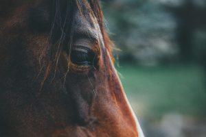 Header blog: Laat je paard nite winnen, trainen met autonomie, clickertraining, positieve bekrachtiging, grondwerk, paard, paardentraining