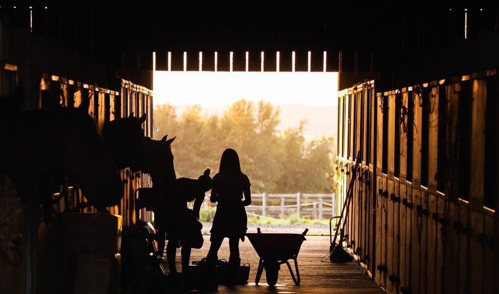 Blog Header: 3 clickertools waar ik niet zonder kan, clickertraining, targettraining, targetstick, trainers pouch, beloningstasje, beloningszakje, clickertraining, positieve bekrachtiging, paard