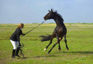Blog header: SOS: mijn paard is bang! paard schrikt, angstig paard, spooking horse, bang, reptielenbrein