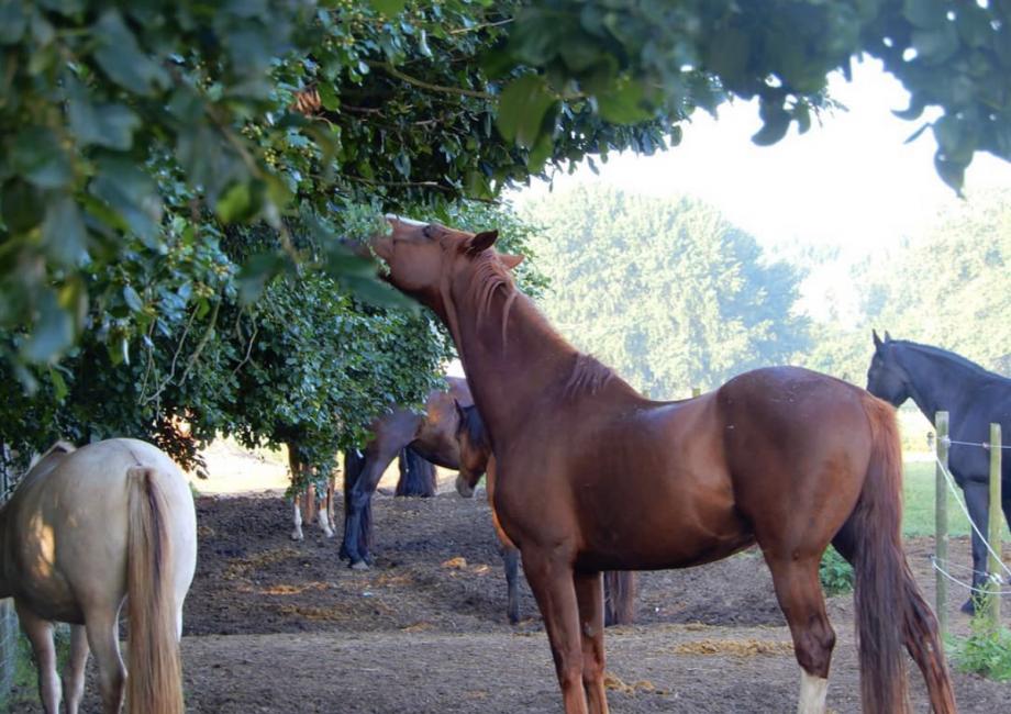 Header Blog: Emoties bij je paard, zo zit het! Let jij wel eens op de emoties van je paard? Voelt hij zich voornamelijk happy? Wanneer je paard veel positieve emoties ervaart ...