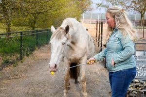Artikel: Gele, uitschuifbare, lichtgewicht targetstick tot 1,2m. Clickertraining, +R training, targettraining met paard