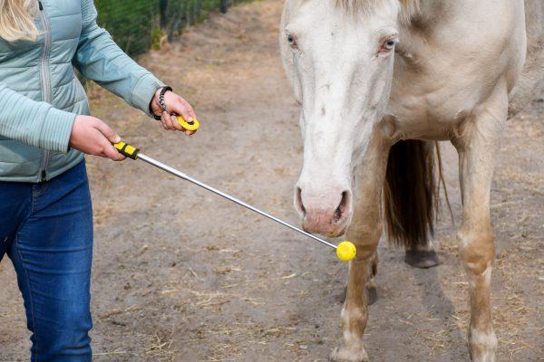 Artikel: Gele, uitschuifbare, lichtgewicht targetstick tot 1,2m. Gele clicker met elastisch polsbandje. Clickertraining, +R training, targettraining met paard