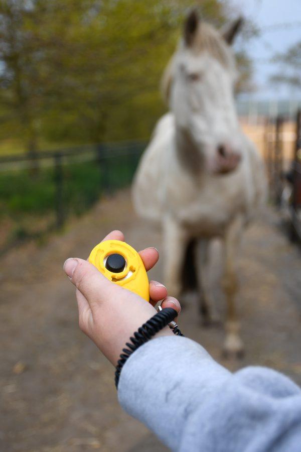 Artikel: gele clicker met elastische polsband. Clicker voor het trainen met voerbeloningen in 3 leuke kleuren en met handig elastisch polsbandje die je ook aan je beloningstasje kan hangen. Clickertraining met paard