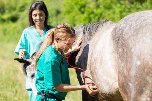 Header Blog: Wat is Cooperative Care? Trainen met Coorperative Care; zo worden medische handelingen, je paard wassen of een bezoekje van de hoefsmid iets waar je paard naar uitkijkt. Gastblog op Positief Paard Community samen met Tamira van Zorg Zonder Dwang
