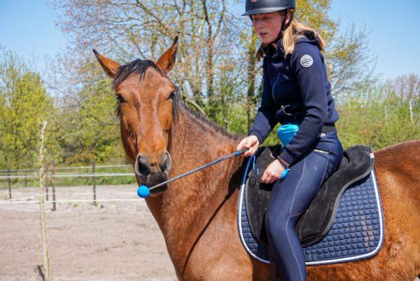 Foto Blog: Targetraining voorkom een jagend paard. Targettraining is een fantastische manier om je paard in beweging te krijgen met clickertraining. Maar hoe voorkom je frustratie?